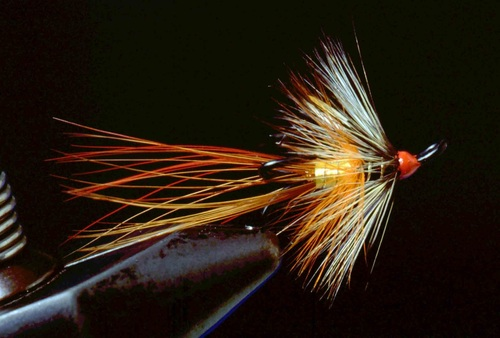 Shrimp Fly 12