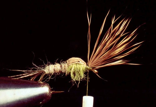 Sparkle Caddis 06