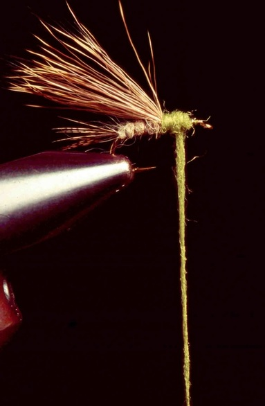 Sparkle Caddis 05