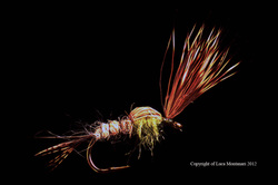 Sparkle Caddis